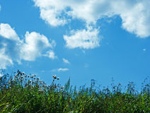 Grass sky background copy space Stock Photo