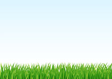 Grass and sky background Stock Images