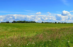 Grass and sky background Royalty Free Stock Image