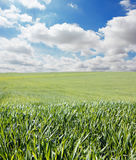 Grass and sky with clouds Royalty Free Stock Photo
