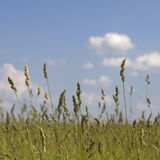 Grass, sky with clouds in the background Royalty Free Stock Photos