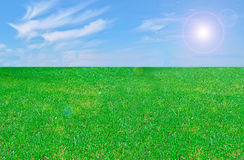 Grass and sky. Field of grass and blue sky Stock Images