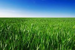 Grass sky. Green grass and blue sky Stock Photos