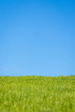Grass and Sky Royalty Free Stock Image