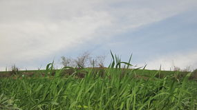 Grass and sky. We have only one planet Stock Photography