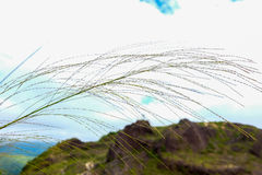 Grass, sky, mountains. The grass blown by the wind on a blue sky Stock Photo