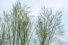 The grass sky page. The grass is still When there is no wind and the sky is bright Royalty Free Stock Photo