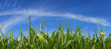 Grass and Sky Panorama Stock Photos