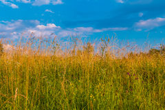 Grass and sky Stock Photo