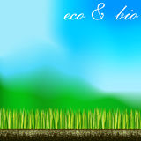 Grass sky root land eco bio background. Biology nature green space lawn plants landscapes Royalty Free Stock Image