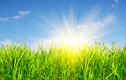 Grass, sky and sun Royalty Free Stock Photos