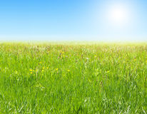 Grass and sky with sun. Royalty Free Stock Images
