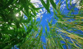 Grass, sky, sun Stock Photos