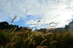 Grass Sky Travel in thailand Stock Photography