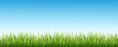 Grass and the sky. Vector illustration of a green grass against the sky Royalty Free Stock Photos