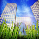 Grass and skyscrapers Stock Image