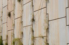 Grass on slit of concrete block Royalty Free Stock Image