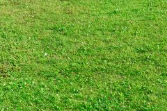 Grass on the slope of the lawn texture. Royalty Free Stock Photography