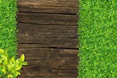 Grass and Small green plants. Depend on old wood stock image