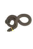 Grass Snake goes 8. This is a shoot of a grass snake latin natrix natrix laying in a 8 formation Stock Photos