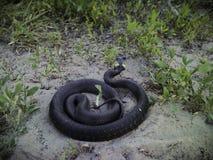 A grass snake on the sand stock photos