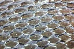 Grass-Snake skin, reptile, macro Royalty Free Stock Image
