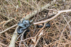 Grass snakes Natrix Natrix. Grass snakes Ntrix Natrix in matting period warming bodyes on spruce branches in forest royalty free stock photos