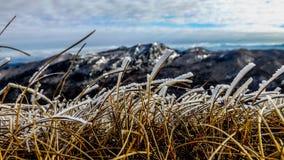 Grass&Snow Fotografia de Stock Royalty Free