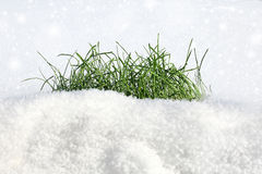 Grass on the snow royalty free stock images
