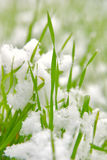 Grass and snow Stock Images