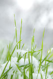 Grass and snow Stock Photography