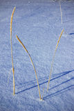 Grass in the snow Royalty Free Stock Photos