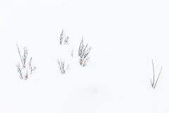 Grass in snow Royalty Free Stock Photography
