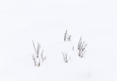 Grass in snow Stock Photos