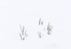 Grass in snow Stock Photos