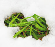 Grass in the snow Royalty Free Stock Images