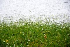 Grass and snow stock photos