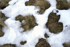 Grass and snow. Patches of snow on the grass Stock Photos