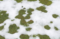 Grass in the Snow Royalty Free Stock Image