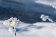 Grass snow pattern background Royalty Free Stock Image
