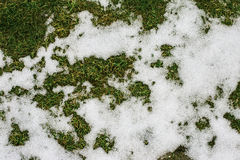 Grass and snow in spring Stock Photos