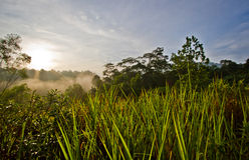 Grass soak in morning sunrise Stock Images