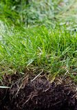 Grass sod royalty free stock photography