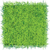 Grass sod. Square of turf grass for professional decoration. Vector illustration. Background Royalty Free Stock Photo