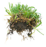 Grass sod Stock Images