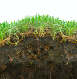 Grass sod soil. Grass over a detailed portion of soil with roots in a rich texture.  Grass blades isolated on a white sky Stock Photos