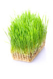 Grass in soil Stock Photo