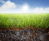 Grass soil. A cross cut look at st. augustine grass with a view of the soil beneath with roots.  Grass lawn with cloudy sky and bright light Stock Photo