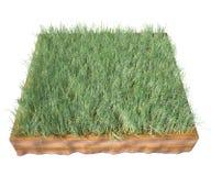 grass soil Royalty Free Stock Photo