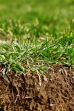 Grass with soil Stock Image